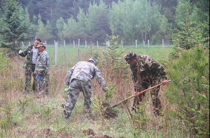 固原市六盘山林业局开展2019年义务植树活动